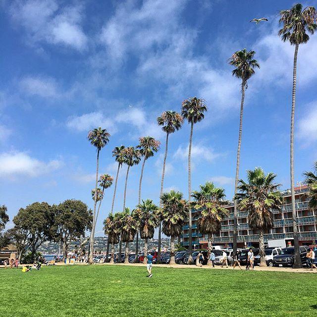 Palmeras californianas #lajolla #sandiego #california #palms #park #lajollalocals #sandiegoconnection #sdlocals - posted by Hector Arturo Marquez  https://www.instagram.com/hecmarquezl. See more post on La Jolla at http://LaJollaLocals.com