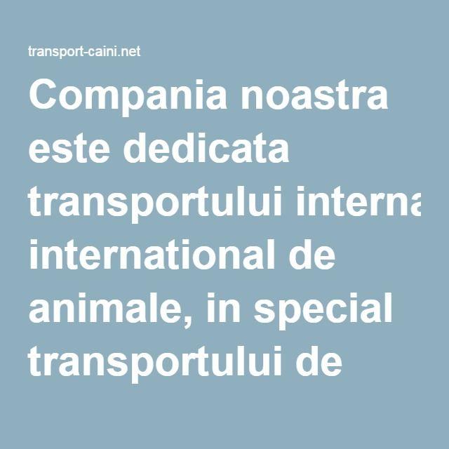 Compania noastra este dedicata transportului international de animale, in special transportului de caini la nivel european.