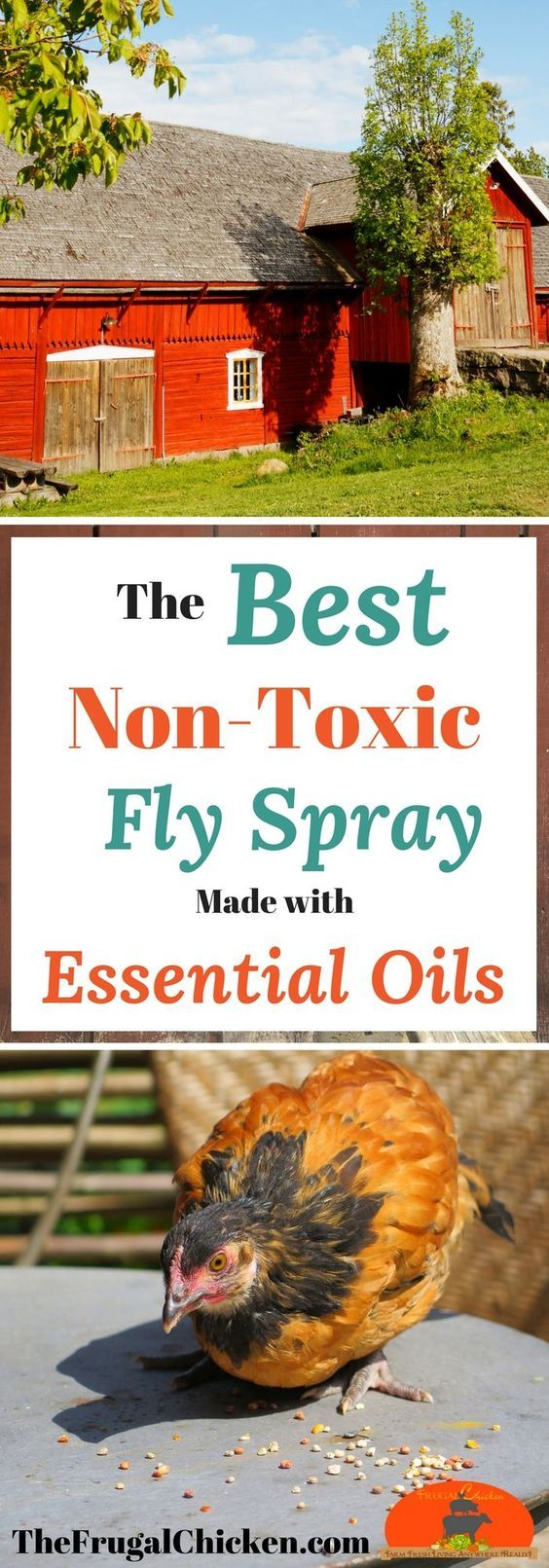 Summer is coming...which means lots of flies. Keep bugs away from your kids, livestock, and chickens with the best homemade fly spray recipe made with Eucalyptus, Lemongrass, and Peppermint essential oils. Make it in your own home!