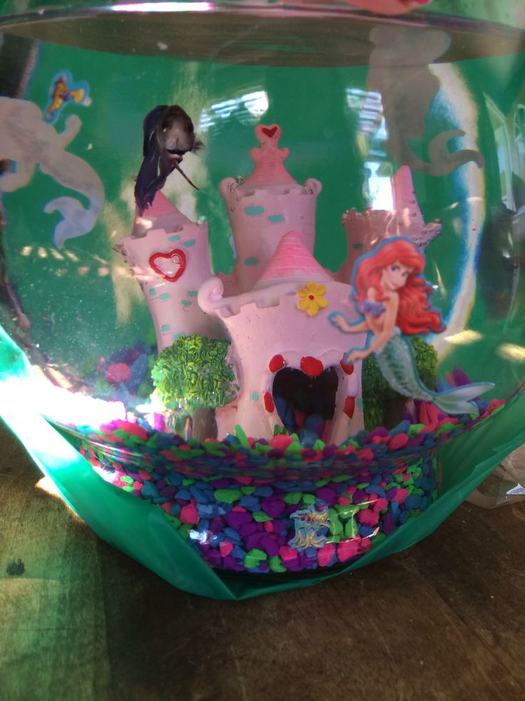 65 best mermaid party images on pinterest under the sea for Mermaid fish tank