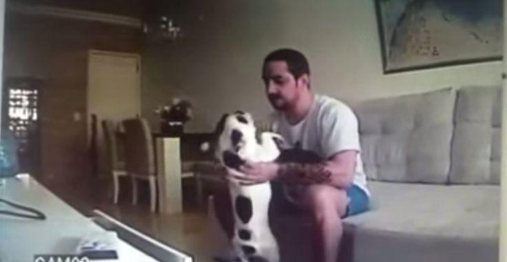 Vídeo mostra Rafael Hermida Fonseca arremessando uma das cadelas contra o chão.