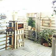 金のなる木/ベンジャミンバロック/DIY棚/セリア/フランネルフラワー/シロシキブ…などに関連する他の写真