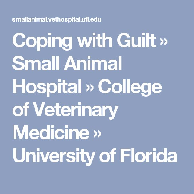 Coping with Guilt » Small Animal Hospital » College of Veterinary Medicine » University of Florida