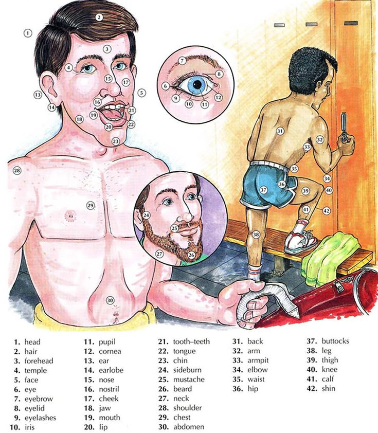 Body parts vocabulary. Learn the English vocabulary for body parts