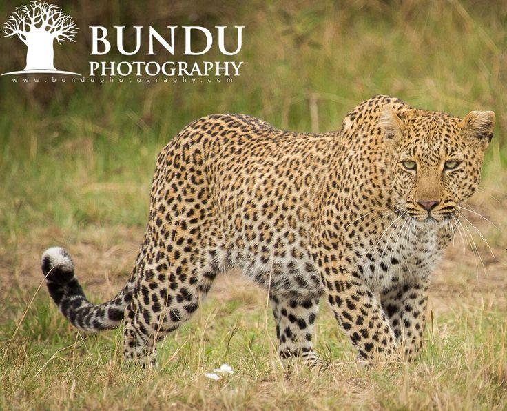 On a stalk in the Masai Mara