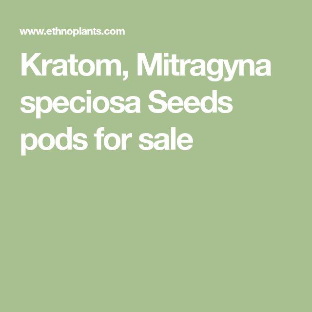 Kratom, Mitragyna speciosa Seeds pods for sale