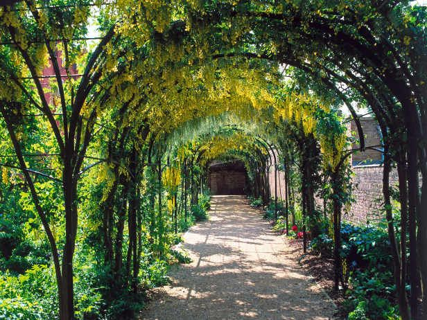 Wisteria Helps Create Magical Walkway Pergolas And Arches