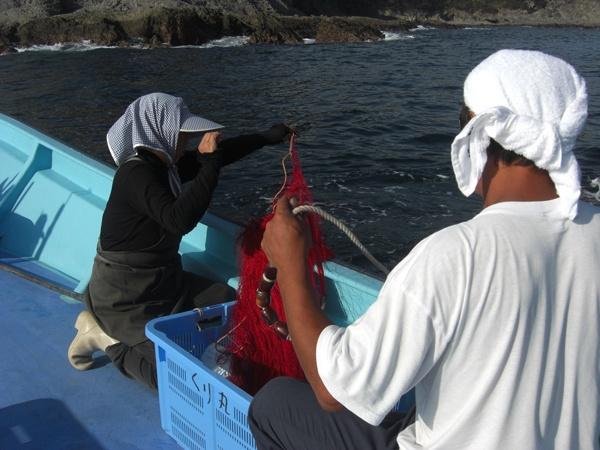 弓ヶ浜での伊勢えび漁で、岸壁ぎりぎりにエビ網を打つ漁師