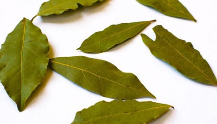 25 best ideas about bay leaves on pinterest soup with ground beef poor mans recipes and man yum - Cook bay leaves ...