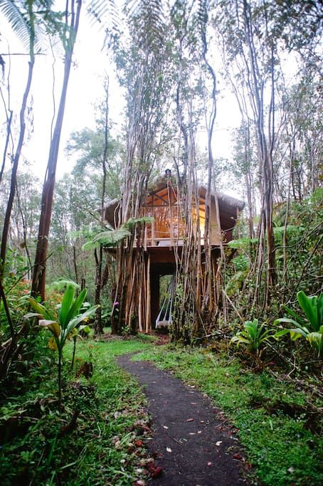 Dreamy Tropical Tree House - Treehouses for Rent in Fern Forest, Hawaii, United States