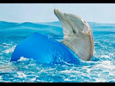 Dolphin Tale 2 (2014) Movie - Morgan Freeman, Ashley Judd, Nathan Gamble