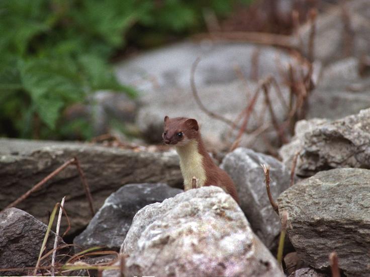 Hermine photo Garé-Vion à Pralognan la Vanoise membre d'Alpine Pearls French Alps