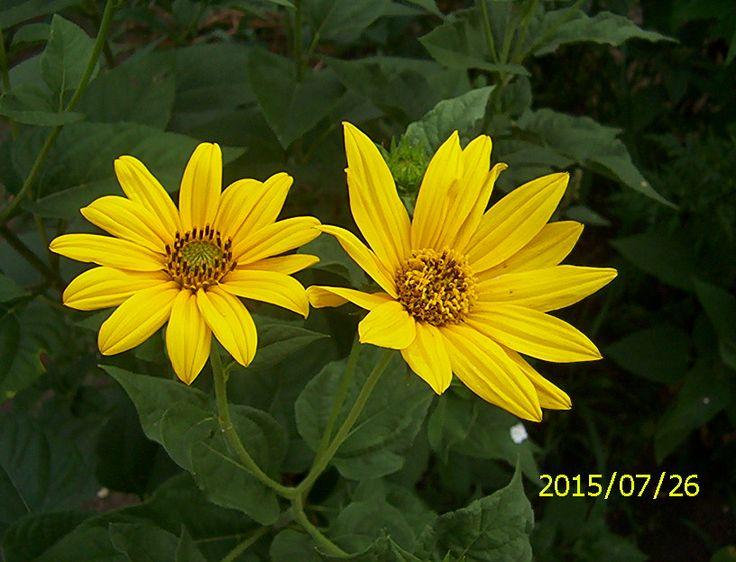 meleg sárga
