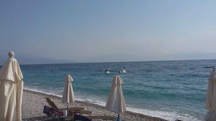 Δελφίνια στην παραλία της Ακράτας - ΒΙΝΤΕΟ