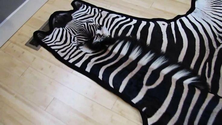 Zebra skin rug $1750 shop now. #ZebraSkinRug, #ZebraSkin, #Zebra #Rug #interiordesign #interiordecor #interiors #interiortips