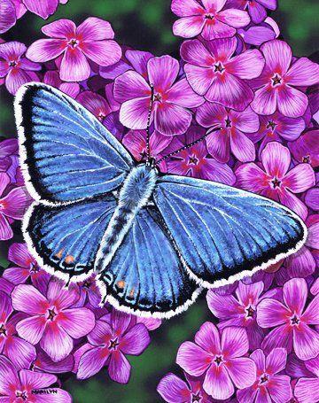 Цветы и бабочки-1.jpg (360×455)
