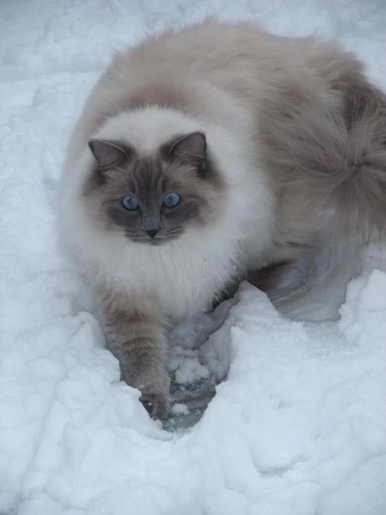 Klicken Sie auf das Foto für mehr bezaubernde und niedliche Katzenvideos und -fotos #cutecats #cats …   – Cats