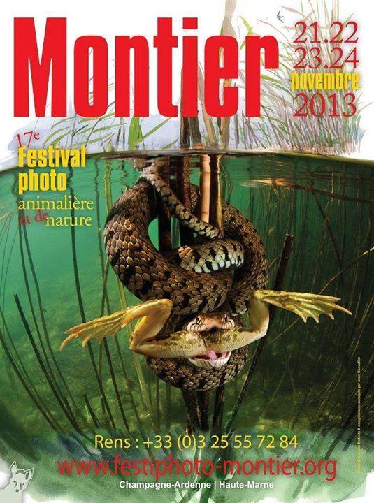 grenouille et couleuvre à collier - affiche d'expo photos