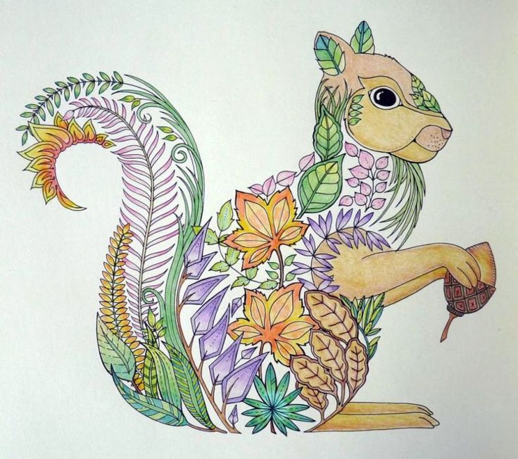 1000 Images About Enchanted Forest Coloring On Pinterest