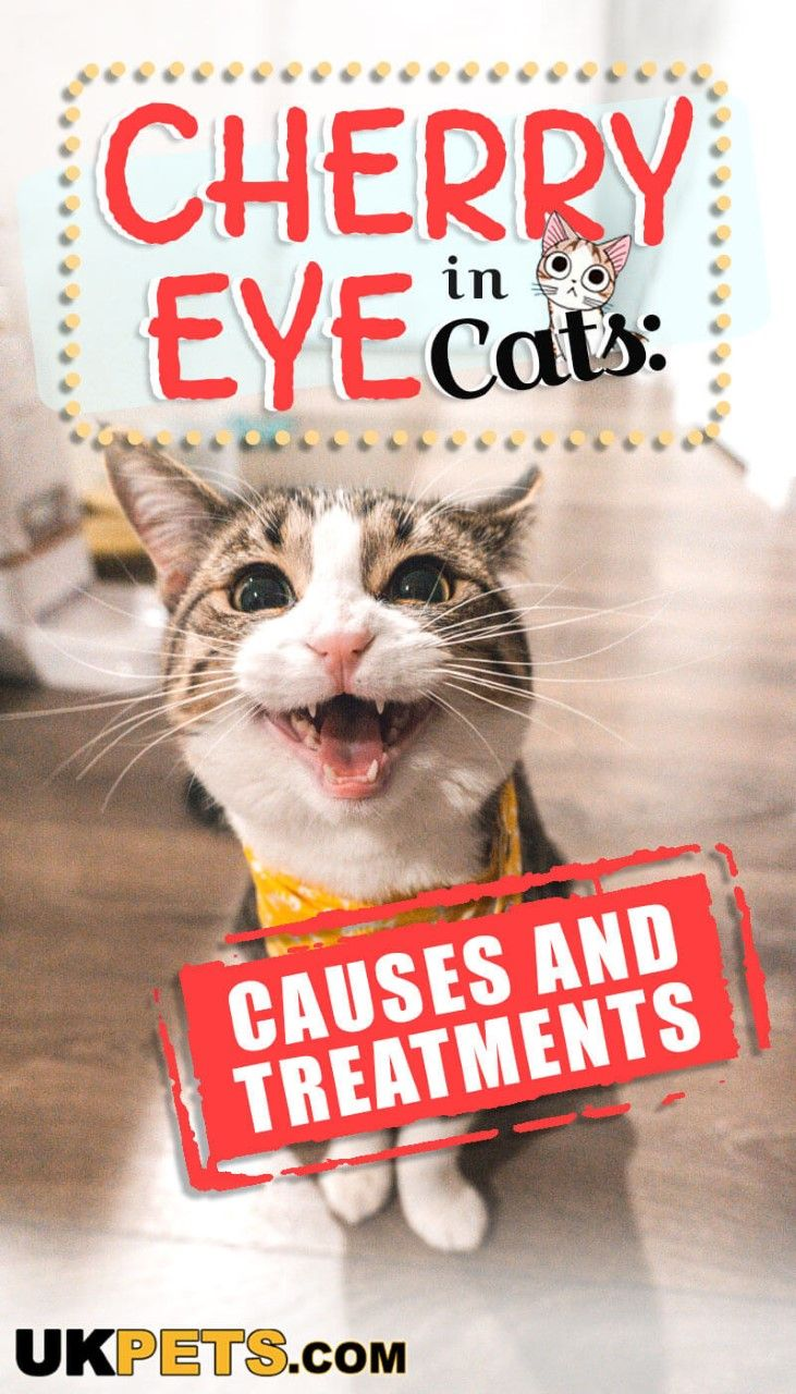 Cherry Eye In Cats Causes And Treatments Kitten Health Kitten Care Cat Health