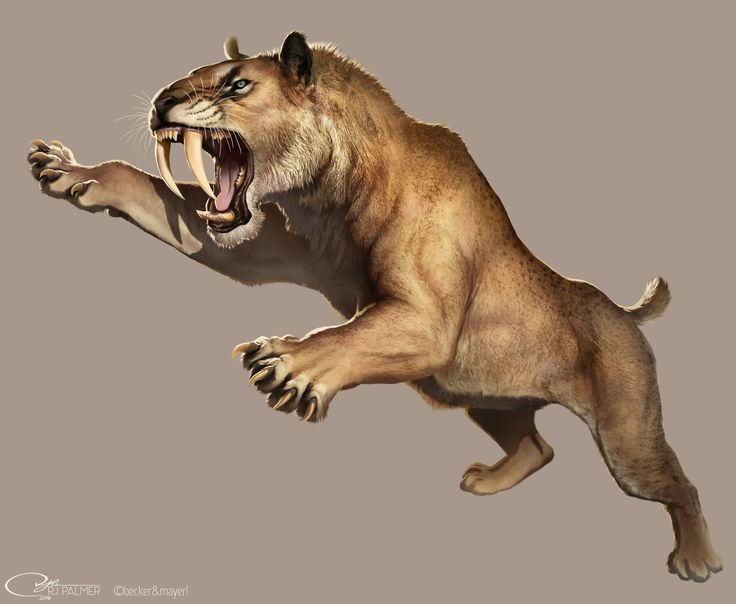 When the Pleistocene arrived, most of the magnificent animals of the Tertiary had been killed off by climate changes or were hunted to extinction. A few prehistoric animals still remained, such as the Woolly Mammoth, Smilodon, Glyptodon, Megatherium, and others. Around 10,000 years ago, the species of primate called Homo sapiens became the primary carnivores on land and developed civilizations.