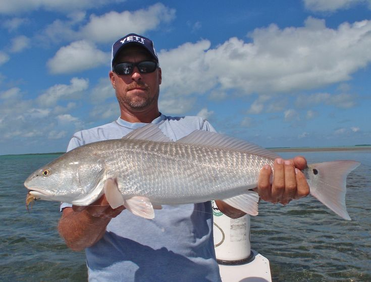 Best 25 islamorada fishing ideas on pinterest florida for Fly fishing miami