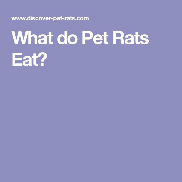 What do Pet Rats Eat?