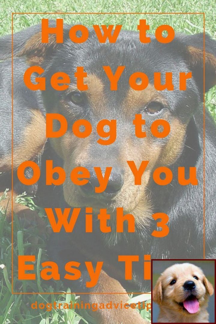 House Training Your Puppy Without Crate And Dog Jealous Behavior