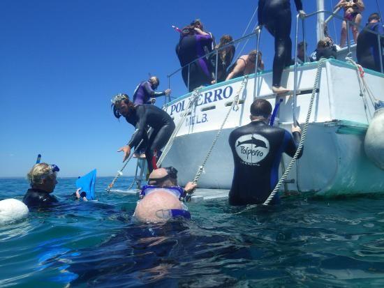 Polperro Dolphin & Seal Swims