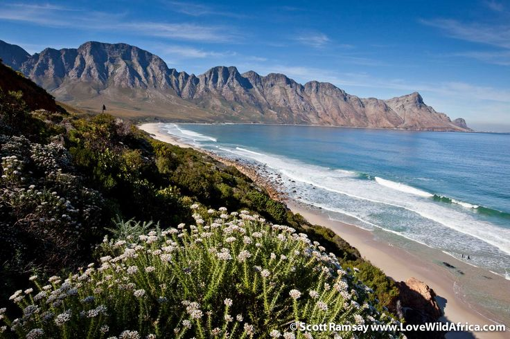 The beautiful Kogelberg Nature Reserve in the Western Cape of South Africa is one of the most floristically-diverse in the world, with more than 1 000 species in just 70 square kilometres.