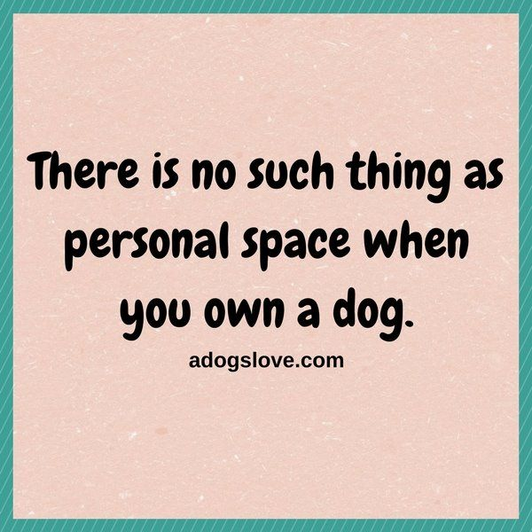 Well..u don't need personal space too..dogs r not lucky to have u ..v r lucky to hv them