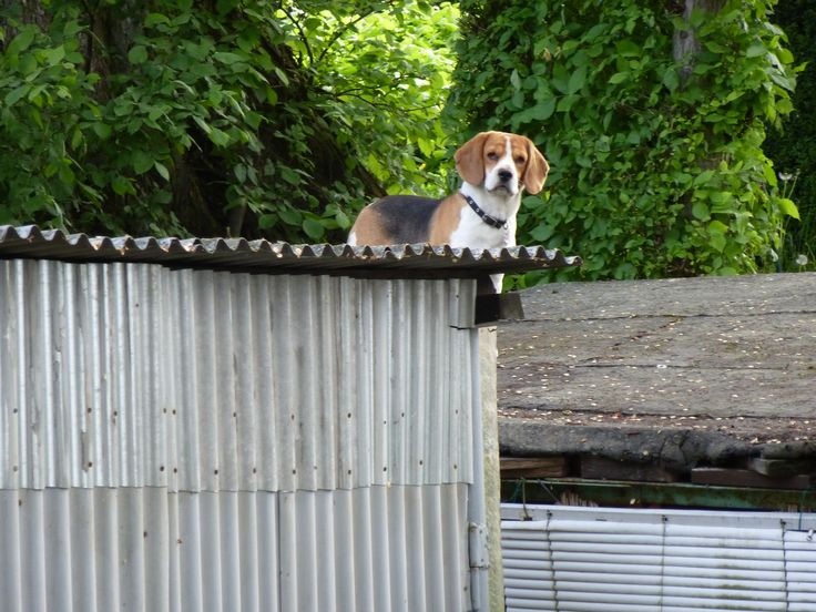 Dachkonstruktion aus Holz bauen  OBI Ratgeber