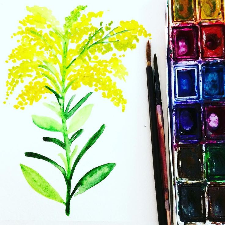 join @creativebug July Daily Painting Challenge hosted by @yaochengdesign - 31 Days of Flowers  to paint  this month! Day 5/ Goldenrod #cbdeawaday #art #artwork #artoftheday #thehappynow #thatsdarling #pursuehappy #pursuepretty #flowers #flower #watercolorpainting #cbdeawaday #art #artwork #artoftheday #thehappynow #thatsdarling #pursuehappy #pursuepretty #flowers #flower #watercolorpainting #watercolor #watercolorart