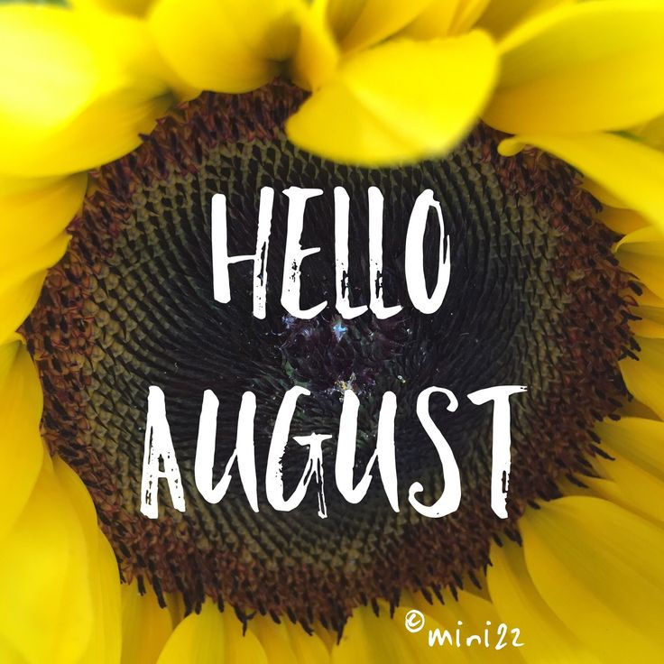 Hello August Sunflower - Tap to see more August wallpapers! @mobile9