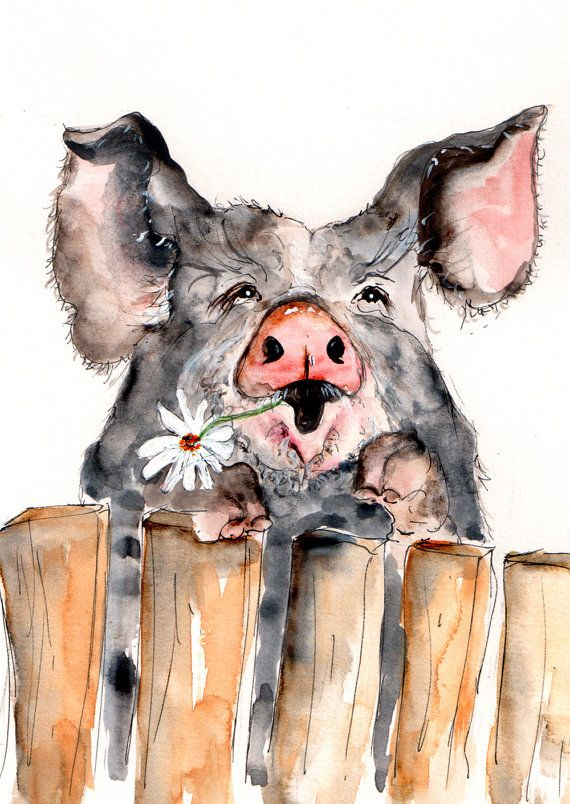 Pig Illustration Painting  Pig  Watercolor Art 6x4 by CathWard