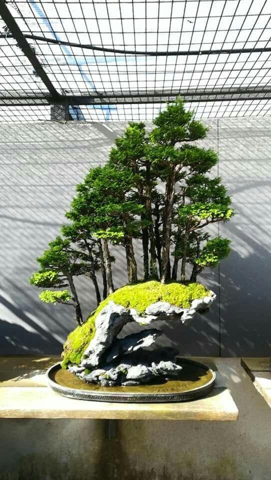 Amazing Bonsai Forest On The Stone Moss And Bonsai Bonsai