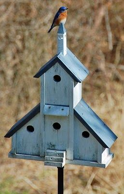 my very favorite bird and my very favorite bird house!  They are nesting in it!