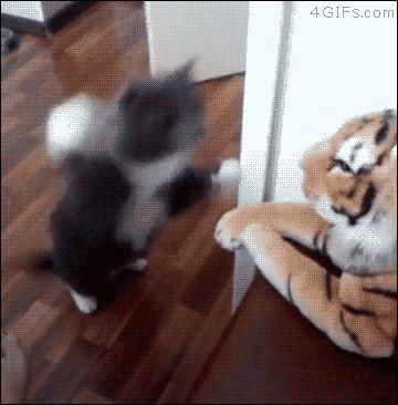 A cat slaps a stuffed animal tiger