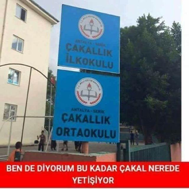 Vay Çakal . . . . . .  #eğlence #mizah #komedi #komik #komikvideolar #türkiye #gülmek #gülmekgüzeldir #takip #takipet #fenomen #takipçi #çok #komik #istanbul #bursa #izmir #konya #ankara #anıyakala #objektifimden #anadolu #folowme #turkishfollowers #takipleşelim #hayatakarken #hayatandanibarettir #buhaftabu #bugununkaresi http://turkrazzi.com/ipost/1518096074853380194/?code=BURXFY8jPBi
