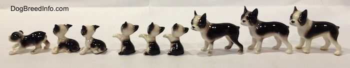 Miniature Boston Terrier Figurine Here is why I PawSitively love Boston Terrier