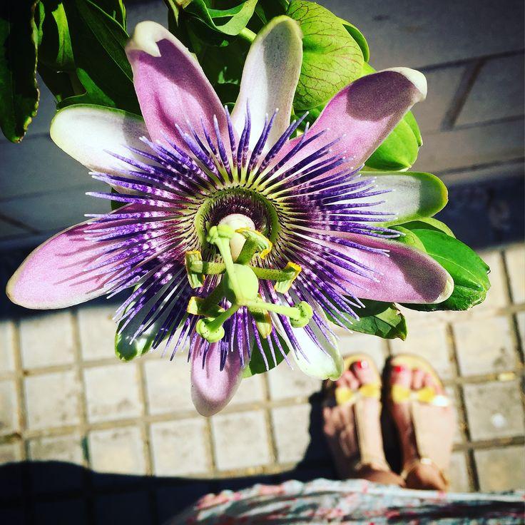 Flor de la pasión con sandalias planas doradas y lazo de ante