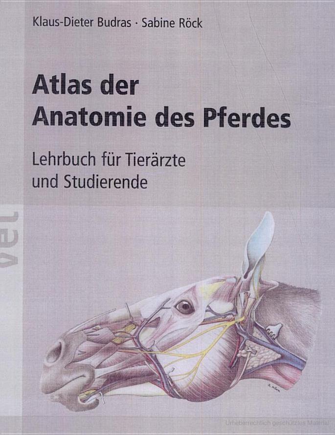 Groß Atlas Der Anatomie Des Menschen Durch Frank Netten ...