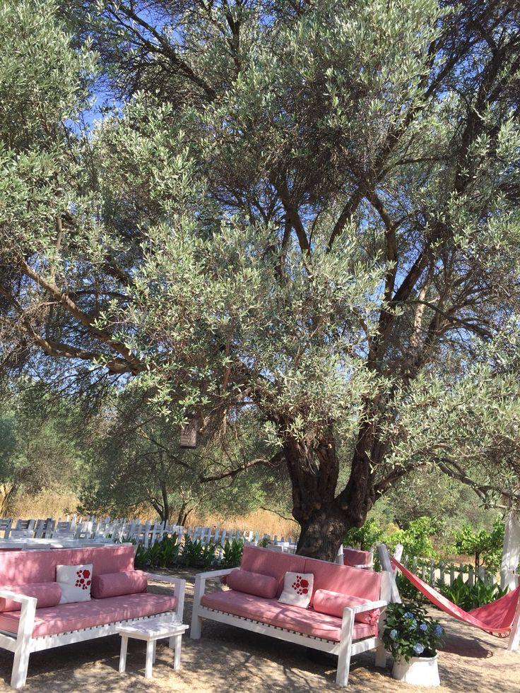 #olive#garden#alacati