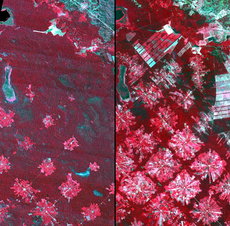 Deforestation, Bolivia.  Near Santa Cruz de la Sierra, Bolivia. Left: August 4, 1986. Right: August 11, 2001. Most of the tropical dry forest visible in the 1986 image (dark red) has been replaced in the 2001 image by resettlement of people from the Altiplano (the Andean high plains) and by soybean production. The radial patterns are part of the San Javier resettlement plan. At the center of each unit is a small community that includes a church, bar/cafe, school and soccer field. The…