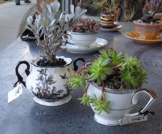 Sugar bowls, creamers, cups & saucers for Succulents. I REALLY love this.