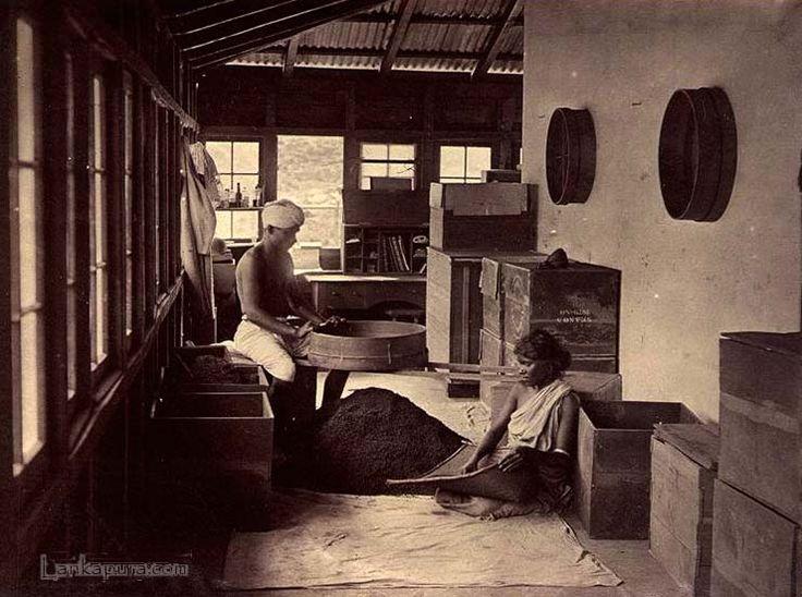 Tea processing, Ceylon c.1880
