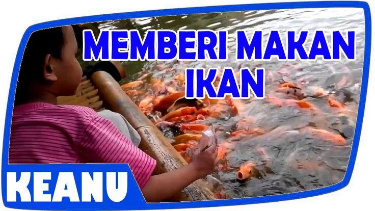 Memberi Makan Ikan Mang Engking Mancing Mania Keanu Kids