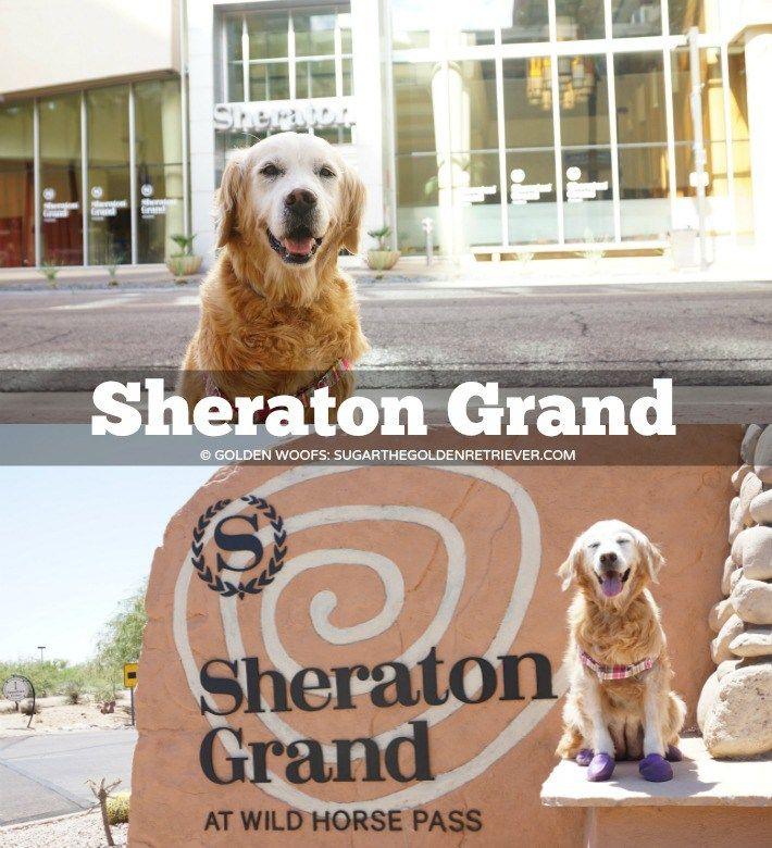 Luxury Dog Friendly Pet Travel Accommodation at Sheraton Grand Phoenix & Sheraton Grand at Wild Horse Pass