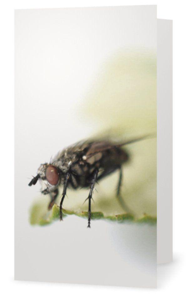 Fly, Fluga. Cards for florists. Gift card for flower arrangements. Scandinavian design. Jäderberg & Co.