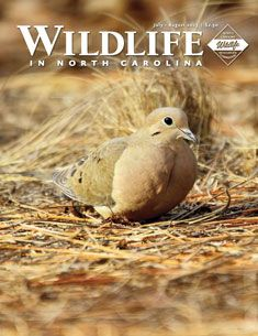 Wildlife in North Carolina:  from the NC Wildlife Resources Commission.  Site contains info on licenses, conservation, hunting and fishing in NC